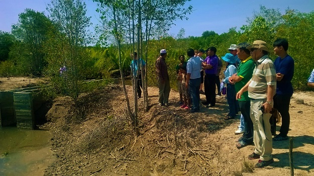 Representatives were shown the site, there was particular interest in the number of volunteer seedlings present and how well the mangrove trees had established.