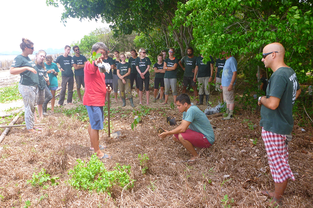 Beach forest planting