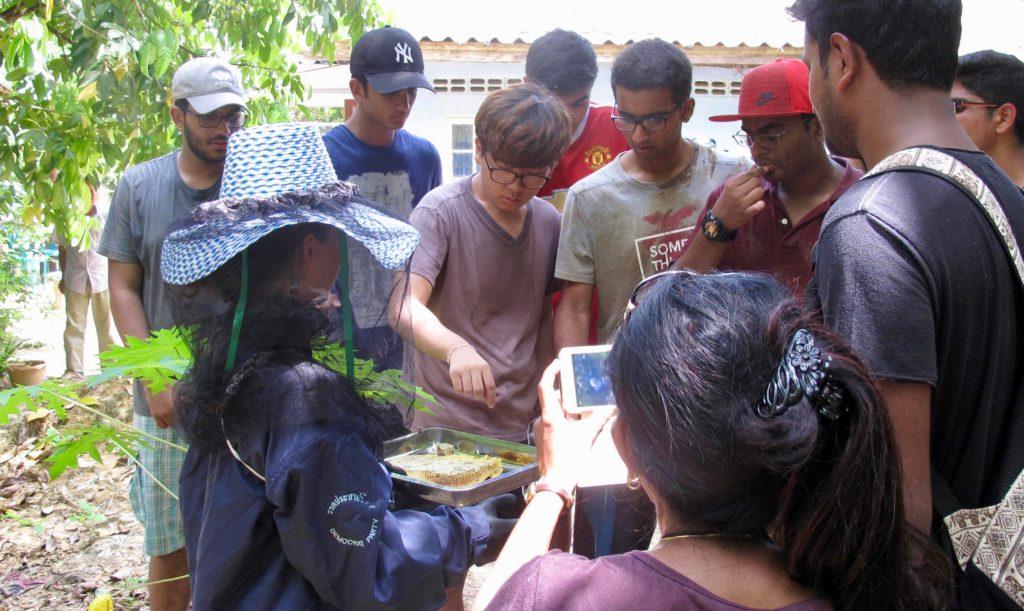 Volunteers tasting the golden honey