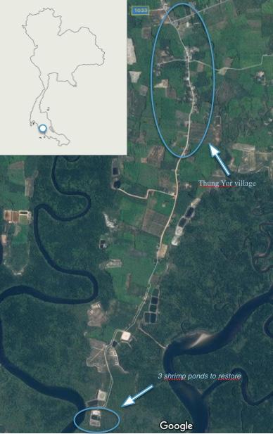 Three abondons shrimp ponds to restore using the CBEMR process